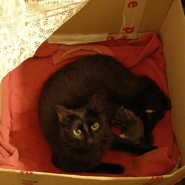 Мико с котятами