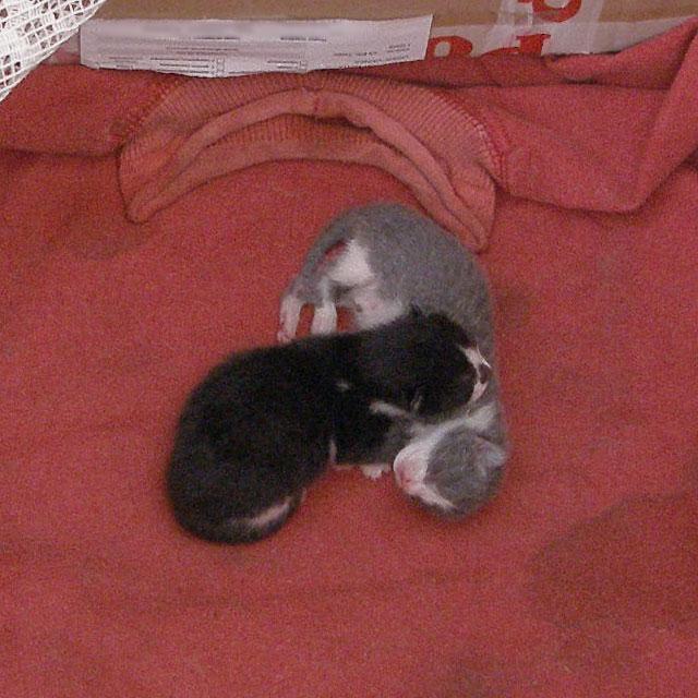 Новорожденные котята спят