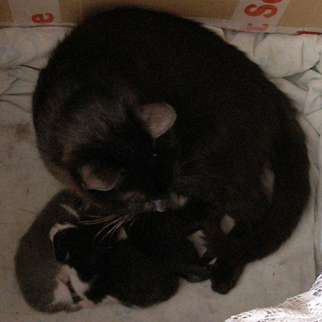 Кошка вернулась в логово к спящим котятам